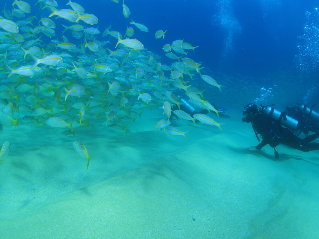 reviews Buceo en Cabo Pulmo