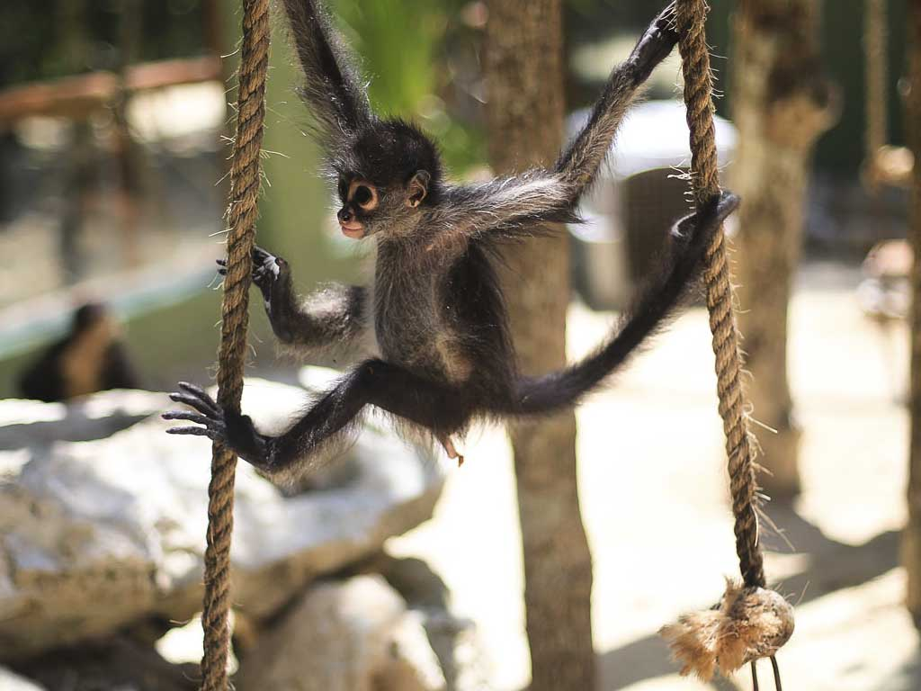 Akumal Monkey Sanctuary desde Playa el Carmen