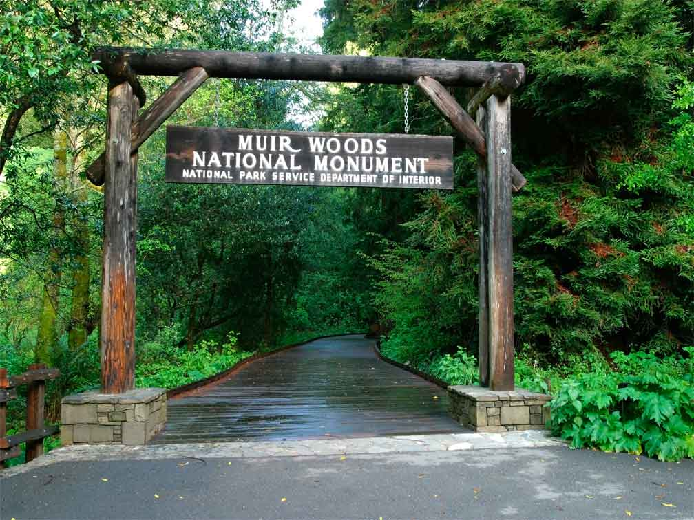 Tour a Muir Woods y Sausalito